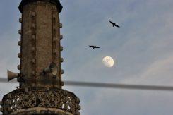 munara, ptice, mjesec