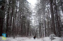 Trebevic zimski trail