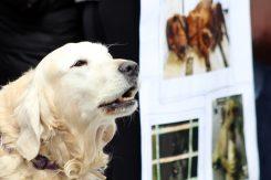 Protest protiv ubijanja pasa