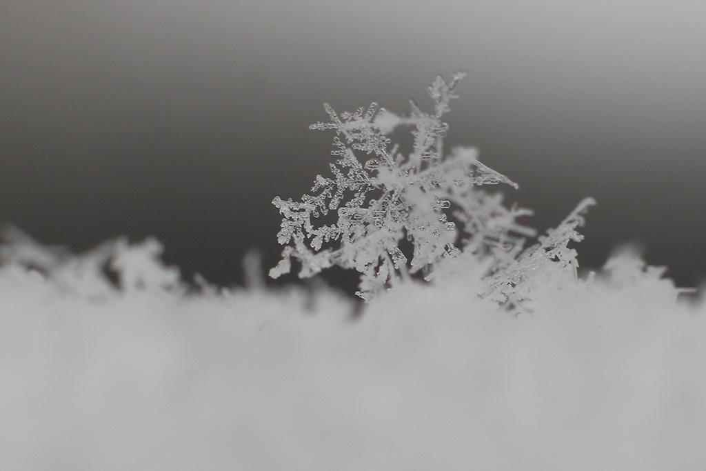 Snijeg, Januar 2016